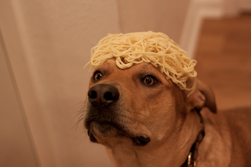 spaghettidog
